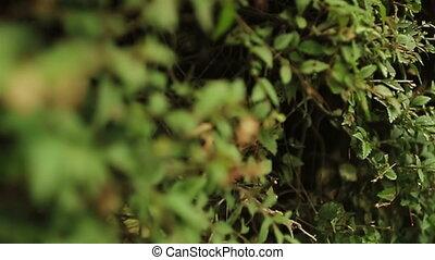 Tall hedge grass endless seamless pattern