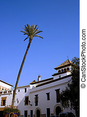 Tall palm tree in a Spanish square