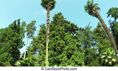 Tall palm trees in botanical garden