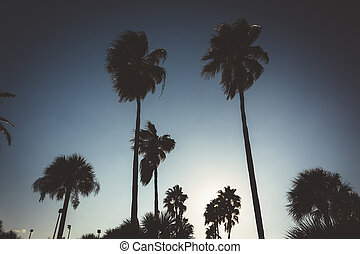 Tall palm trees in Daytona Beach, Florida.