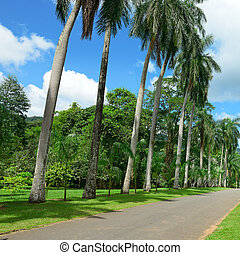 Tall palm trees in the park