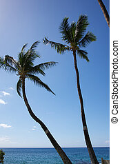 Tall palm trees set against clear blue sky and ocean