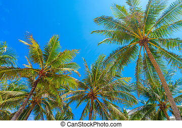 Tall palm trees with blue sky summer background