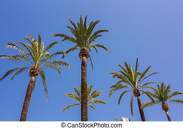 tall palm trees with sky background