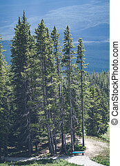 Tall pine trees on a hill