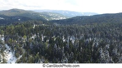 Tall pine trees on a hilltop covered with snow