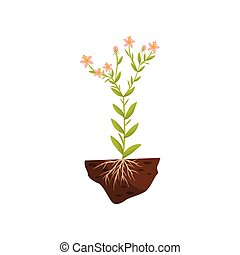 Tall plant with pink flowers and roots in the soil. Vector illustration.