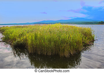 reeds off the coast of a beautiful lake with mountains