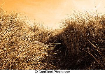 tall sand dune reeds at sunset