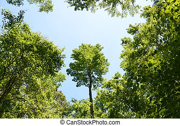 tall tree in the forest with green leaves