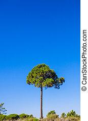 Tall tree on background blue sky