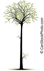 Vector tall tree isolated over white with green foliage andblack tree. Silhouette suitable for sticker et decorative element