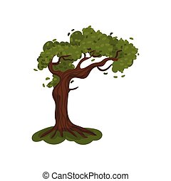 Tall tree with a lush crown. Vector illustration on white background.