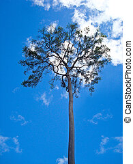 tall tree with blue sky