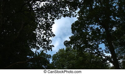 Steady, low angle, medium wide shot of tree limbs making a small hole, clouds and sky peak through.
