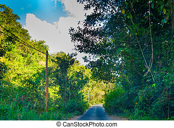 Tall trees by a narrow country road in Guadeloupe