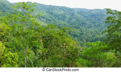 Tall trees in the tropical jungle