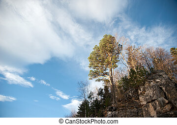 Tall trees on a mountain
