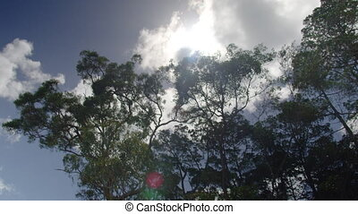 Tall trees under the sun - A moving shot from beneath the...