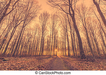 Tall tress by the road in a forest sunrise