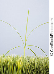 Tall weed in lawn. - Single tall grass sprout standing out ...