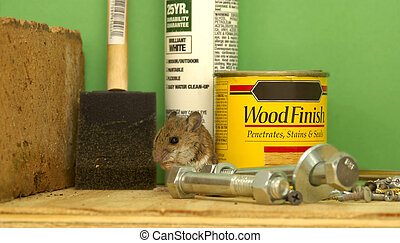 taller, ratón