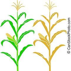 tallo maíz, vector, ilustración