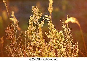 tallos, de, otoño, pasto o césped