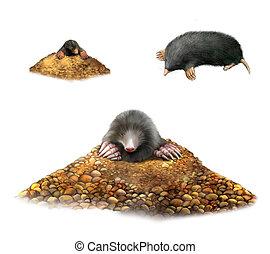 talpa, esposizione, animale, isolato, bianco, molehill, claws., illustrazione, fondo.