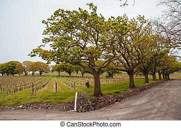 Tamar Valley winery and landscape near Launceston in Tasmania, Australia