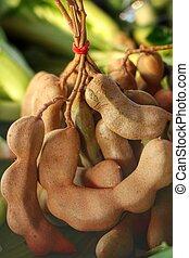 Tamarind - fresh tamarind in the market