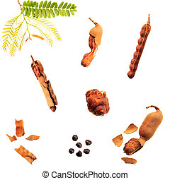 Tamarind on a white background