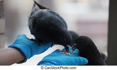 tame birds