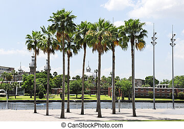 Palm trees along Tampa's Riverwalk with a view of the University of Tampa across the Hillsborough River.