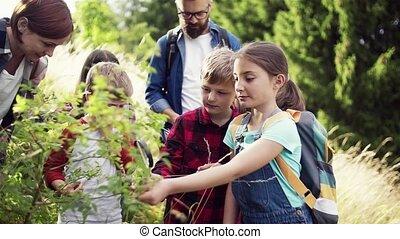 tanár, természet, mező, gyerekek, science., elgáncsol,...