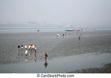 tan, durante, pueblo, caminata, agua, bajo, matla, marea, orilla, otro, río, gente, bajas, india, envase