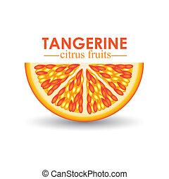 tangerine citrus fruit over white background vector ...