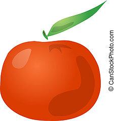 Tangerine fruit, hand drawn colored lineart illustration