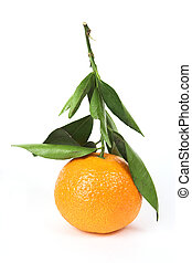 Tangerine on stem