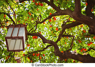 Tangerine tree and a Chinese lantern
