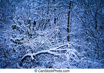Tangled forest undergrowth in snow