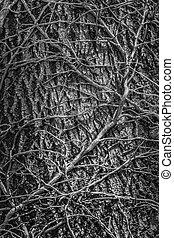 Tangled leafless vines
