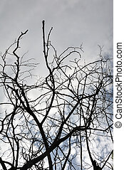 tangled tree branches