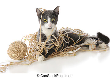 Tangled-Up Kitty - A gray and white cat looking perplexed as...