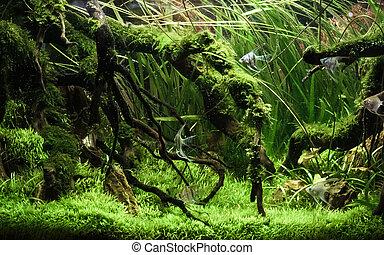 tank., scape, アクア色, fish, 自然, 植物, カラフルである, 美しい, 緑, トロピカル, 水族館