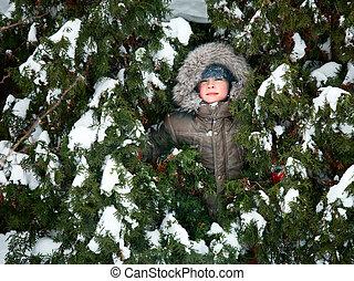 tanne, kind, bäume, verstecken