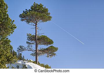 tanne, und, motorflugzeug, auf, der, himmelsgewölbe