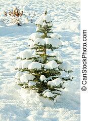 tanne, winter- baum, jahr, neu , feiertag, weihnachten, landschaftsbild