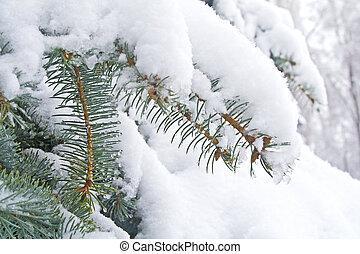 Tannenbaum Mit Schneefall.Tannenbaum Schnee Hell Nachmittag Tannenbaum Winter Schnee