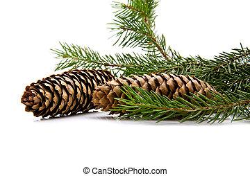 tannenbaum, zweig, kegel